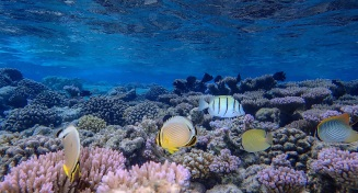 Shallow water reefs still thrive in many parts of the Pacific where water quality is untainted by runoff and effluent