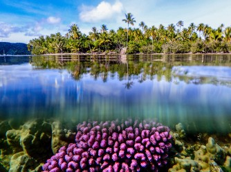 With the surface of the water reflecting like a mirror, coral and palms radiate in a tropical paradise