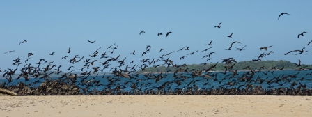 In peculiar behavior, hundreds of birds alight on one stretch of sand while other beaches remain vacant