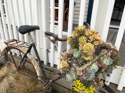 An eclectic bicycle basket planted with succulents graces the front porch of a Russell, New Zealand home