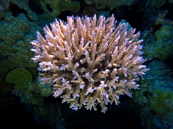 South Minerva Reef's coral blossoms in a pristine environment