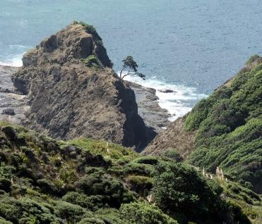 Cape pōhutukawa.sm