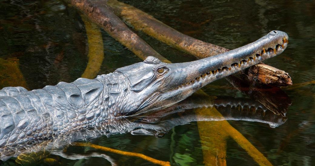 Croc.sm